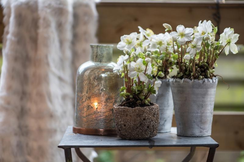 zimmerpflanzen passend zur neuen einrichtung. Black Bedroom Furniture Sets. Home Design Ideas