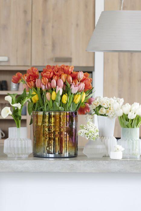 die tulpe steht im januar auf der blumenagenda nachrichten gartencenter leurs venlo holland. Black Bedroom Furniture Sets. Home Design Ideas
