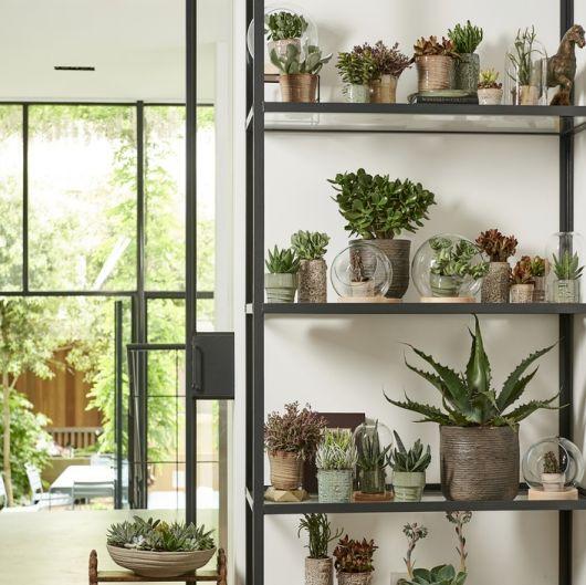 Nachrichten gartencenter leurs venlo holland for Zimmerpflanzen dekorativ