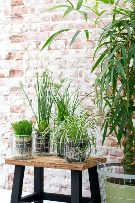 Tierfreundliches gr n zimmer pflanzen des monats oktober for Pflanzen zimmer