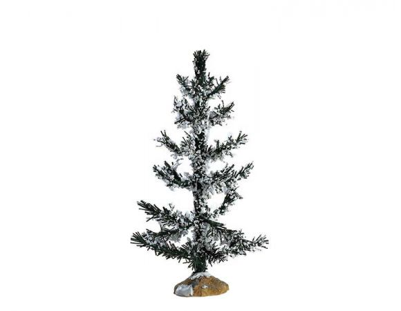 WHITE PINE, MEDIUM - image 1